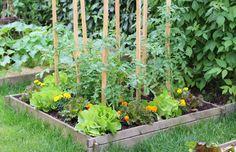 Asociación de cultivos en el huerto urbano