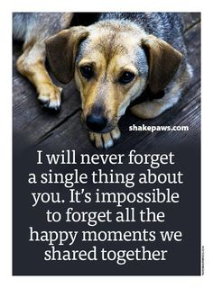 Dog Training Name .Dog Training Name Small Puppies, Dogs And Puppies, Doggies, Dog Quotes, Animal Quotes, Schnauzers, I Love Dogs, Puppy Love, Miss My Dog