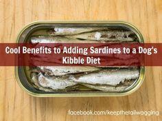 Homemade Dog Food Adding Sardines to a Dog's Kibble Diet: brain food, boosts immune system, good for arthritis. Homemade Dog Treats, Pet Treats, Dog Nutrition, Dog Diet, Dog Feeding, Brain Food, Training Your Dog, Pet Health, Dog Food Recipes