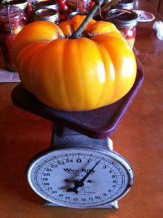 a 2lb tomato