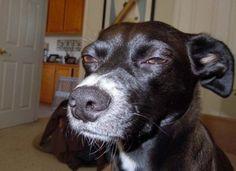 Top 12 des photos de chiens suspicieux, à qui on la fait pas
