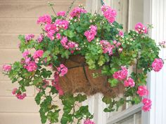 line hanging baskets with plastic bags