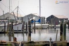 Seagulls flying over docks on Smith Island Maryland.