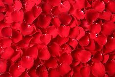 Okvětní lístky růže Red Rose Petals, Red Roses, Rose Photos, Nature Photos, Abstract, Plants, Recipes, Flowers, Summary