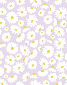 Pop Daisy - Lavender