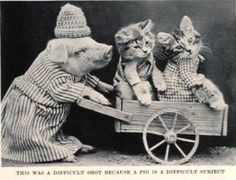 """Probably the progenitor of shameless cat pictures was English photog Harry Pointer (1822-1889), who snapped approximately 200 photos of his perplexed albeit jovial """"Brighton Cats."""""""