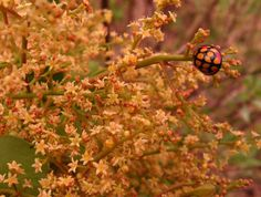 Pests, pest control and indigenous plants