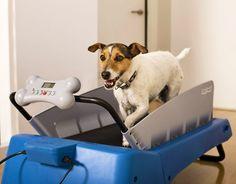 cane su tapis roulant - Cerca con Google