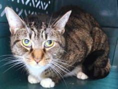 ***TO BE DESTROYED 08/07/16*** PERFECTLY HEALTHY MALAYSIA CHIRPED AND ALLOWED PETTING BUT WILL BE KILLED JUST BECAUSE THEY CAN!!! MALAYSIA was brought into the shelter by someone who had her for