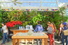 Florafelt Vertical Garden for the San Francisco Conservatory of Flowers. http://ConservatoryOfFlowers.org