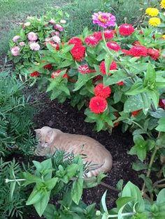 Kotek w ogródku.  Projektowanie i pielęgnacja ogrodów: www.transgaj.pl  for her cat garden