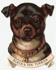 Have never seen a picture of a Bland and Tan Terrier. cool Terrier image from mudbayimages. Animals Images, Cute Animals, Black And Tan Terrier, Vintage Dog, Vintage Prints, Puppies And Kitties, Arte Disney, Vintage Ephemera, Funny Animal Pictures