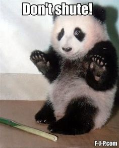 Funny Don't Shute Panda Pun