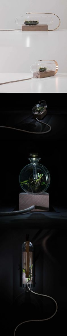 Terra Miniature Glass Terrarium is the direct result of merging biology and design. The TERRA project; a series of unique glass terrarium that contain miniature plants. Conceived from the designer's fascination with nature and the manmade world. #unique #terrarium #nature