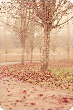 Frosty Tree's Photography By: Cassandra     Sasse Photography