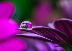 Water Drop Photography - 18 #photography #waterdrop #beautifulphotography