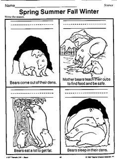 bear hibernating worksheet- talk about the seasons Animal Activities, Winter Activities, Science Activities, Kindergarten Science, Teaching Science, Life Science, Seasons Lessons, Animals That Hibernate, Seasons Worksheets