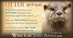 In-depth Otter Symbolism & Otter Meanings! Otter as a Spirit, Totem, &…