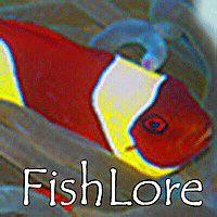 38 best fish stuff images fresh water soda aquarium