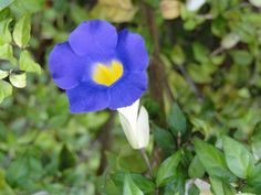 Flor do Cerrado mineiro