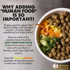 Fed your animal REAL food #improvedhealth #realfood #humanfoodfordogs