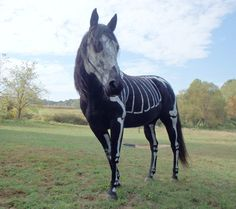 Lady Paints Horse To Look Like Skeleton Horse