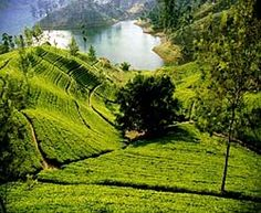 Nuwara Eliya, Sri Lanka. The tea mountains! Thousands and thousands of foot in the air.