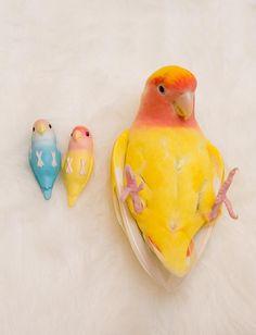 Avian Rights Activist Funny Birds, Cute Birds, Pretty Birds, Beautiful Birds, Animals Beautiful, Cute Little Animals, Cute Funny Animals, Cute Creatures, Beautiful Creatures