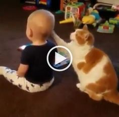 Cute Animals Animated Pictures next Funny Cats And Kittens Meowing and Cat And Her Kittens but How To Draw Cute Animals Art Hub Funny Cute Cats, Cute Cat Gif, Cute Cats And Kittens, I Love Cats, Kittens Cutest, Kittens Meowing, Kittens Playing, Kitty Cats, Animals And Pets