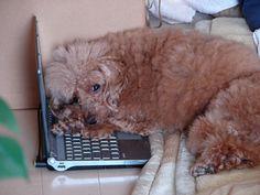 http://chewie.blog92.fc2.com/blog-entry-648.html