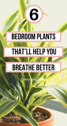 Best Indoor Plants, Indoor Garden, Garden Plants, House Plants Decor, Garden Art, Vegetable Garden, Outdoor Gardens, Inside Plants, Cool Plants