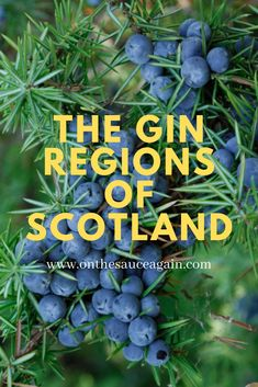 Cocktail And Mocktail, Fun Cocktails, Botanicals For Gin, Scottish Gin, Apple Mint, Gin Tasting, Best Cocktail Recipes, Gin Lovers, Summer Barbecue