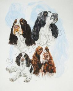 English Springer Spaniel - by Barbara Keith