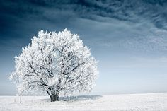 Find Frozen Tree On Winter Field Blue stock images in HD and millions of other royalty-free stock photos, illustrations and vectors in the Shutterstock collection. Thousands of new, high-quality pictures added every day. Ice Storm, Hail Storm, Snow Blizzard, Survival, Snow Covered Trees, Cold Ice, Water Element, Winter Is Coming, Mother Nature