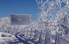 Snow and rime ice at the North Carolina state line at Roan Mountain