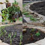 Small Backyard Landscape Update