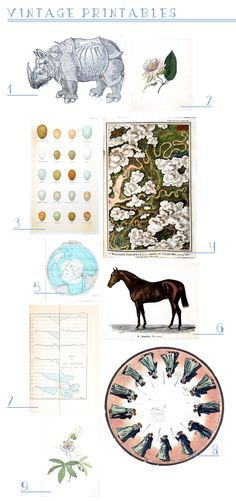 Best Online Art Resources | Emily Henderson Vintage Botanicals