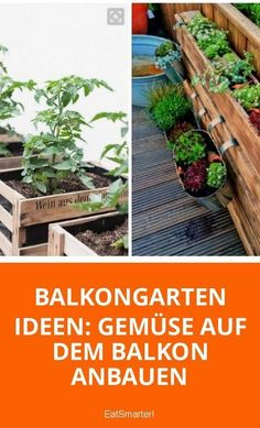 Grow vegetables on the balcony - Garden plants - Beautiful Garden Types - Beautiful Garden Types Container Gardening Vegetables, Planting Vegetables, Growing Vegetables, Growing Tomatoes, Vegetable Gardening, Large Indoor Plants, Outdoor Plants, Balcony Herb Gardens, Outdoor Gardens