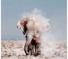 Embrace the crazy, explore the wild.