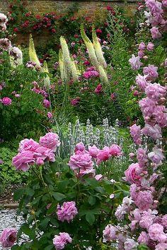 Mottisfont Abbey Garden century - most beautiful rose garden in the UK), Mottisfont Lane, Roms Cottage Garden Design, Cottage Garden Plants, Garden Shrubs, Pink Garden, Dream Garden, Love Flowers, Beautiful Flowers, English Country Gardens, Garden Planning