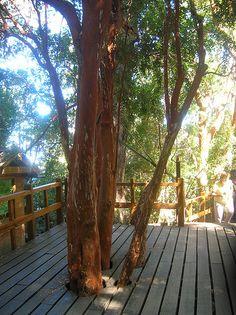 Bariloche - Bosque de arrayanes 02