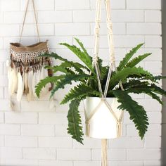 A beautiful natural cotton plant hanger to showcase your favourite indoor plant. Dimensions: length Can fit a pot up to in width Cotton Plant, Macrame Plant Hangers, Bohemian Living, Indoor Plants, Colours, Crafty, Natural, Rope Basket, Home Decor