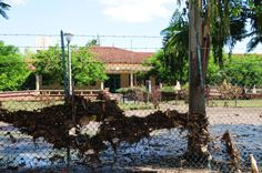13 feb 2013:   Vattennivåerna i översvämningsdrabbade Gazaprovinsen i södra Moçambique börjar äntligen sjunka. Men områdets största stad Chokwe är fortfarande obeboelig och bristen på sanitet börjar bli ett allvarligt problem. UNICEF-personal på plats varnar för ökad risk för kolerautbrott.