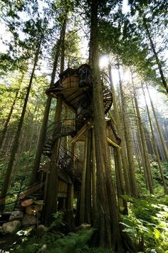 studio on the ground, ladder out the roof to the tree house above... sounds like a sweet idea