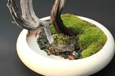 新しいメダカ飼育の楽しみ方!BON Style(盆スタイル) Indoor Pond, Indoor Water Garden, Planted Aquarium, Aquarium Fish, Mini Pond, Mini Bonsai, Home Decor Shelves, Garden Terrarium, Small Terrarium