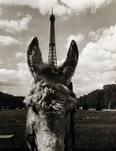 Licorne parisienne. / Parisian Unicorn. / Eiffel Tower and little horse. / By Robert Doisneau, 1960.