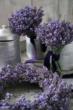 ╭⊰✿.¸¸Ꭿℓℓ Ꮭąⱴҽɳɖҽɽ.¸¸.✿⊱╮ ~ Lavender