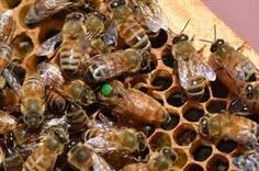 Image result for macro photography of honey bees