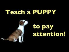 Pinner says: This is my favorite behavior to train owners to do with their dogs. Schnauzer Mix, Miniature Schnauzer Puppies, Dog Clicker Training, Puppy Training Tips, Reactive Dog, Dog Training Courses, Cute Puppy Videos, Doge, Puppy Love
