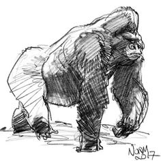 Gorilla sketch from online reference. Trying my best to keep it loose while studying the forms. Norm #grizandnorm #gorilla #procreate